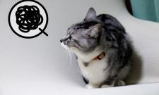【CGスタッフBlog】理系学生はサークルに入るべきか